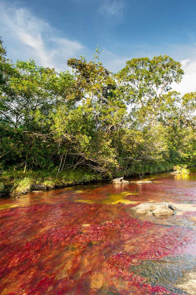 1024px-Caño_Cristales_01