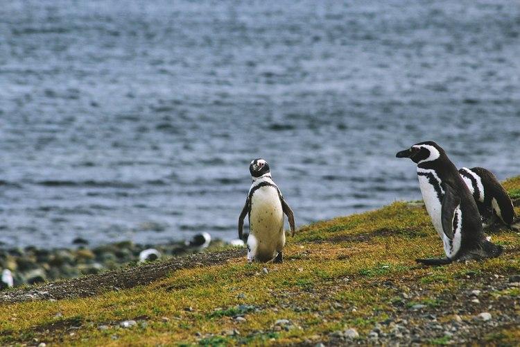 1024px-Magdalena_Island,_Chile_(Unsplash)