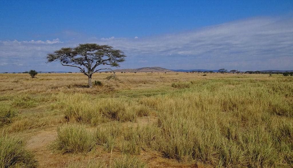 1024px-Serengeti-Landscape-2012
