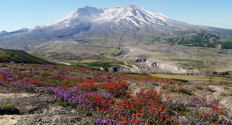 1024px-Wildflower_season_at_Mt._St._Helens_National_Monument