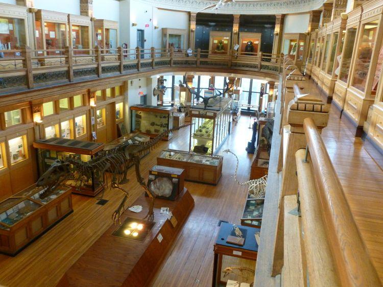 1600px-Interior_Redpath_Museum