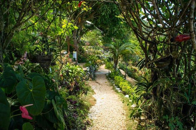 ahhh-ras-natango-gallery-and-garden-tour-from-montego-bay-in-montego-bay-199221