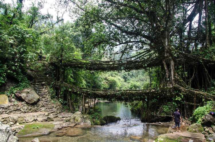 Double_Decker_Living_Root_Bridge1