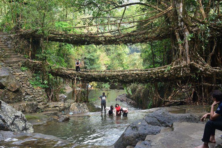 Double_decker_living_root_bridge_02