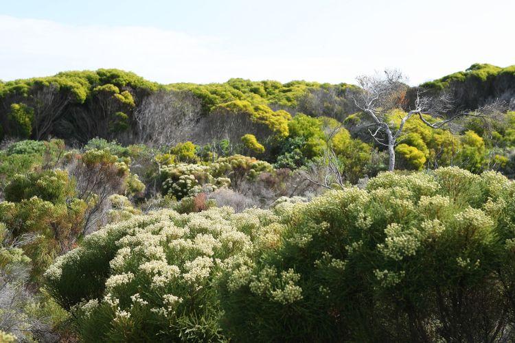 Flora_at_Cape_Peninsula