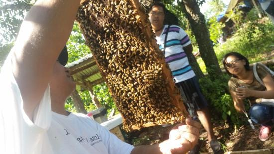 honey-at-milea-bee-farm
