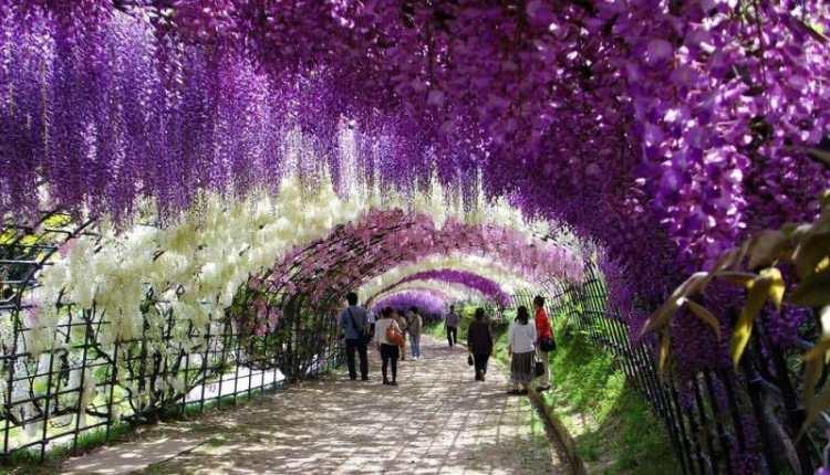 kawachi-fuji-garden-kitakyushu-japan-wisteria-1.jpg