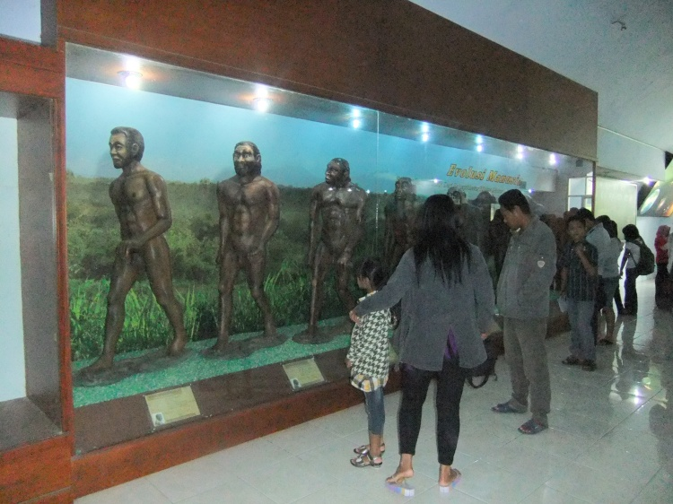 Museum_Sangiran_Man_Evolution