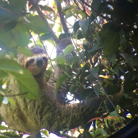 naturalist-michael-araya.jpg