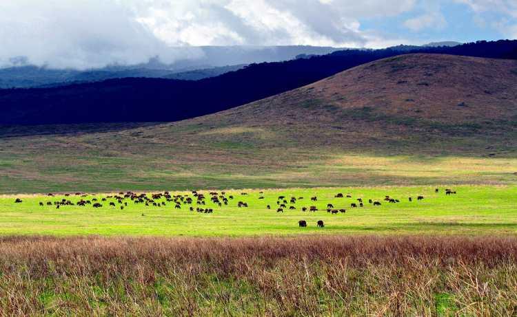 Ngoronogro_view