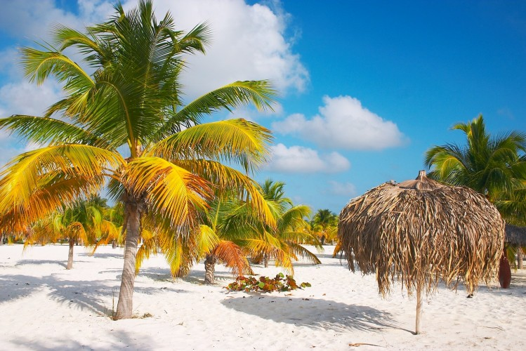 Palm_trees_and_a_bech_umprella_at_the_Sirena_beach_at_Cayo_Largo