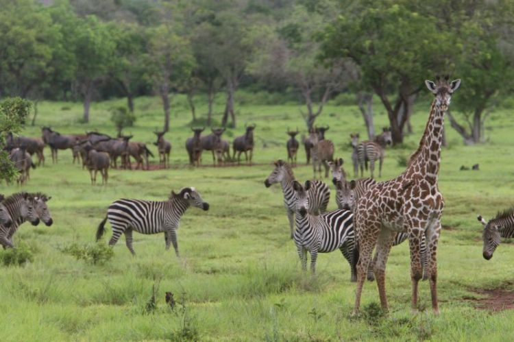 Selous_Game_Reserve-8
