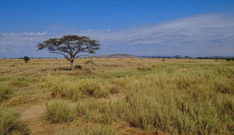 Serengeti-Landscape-2012