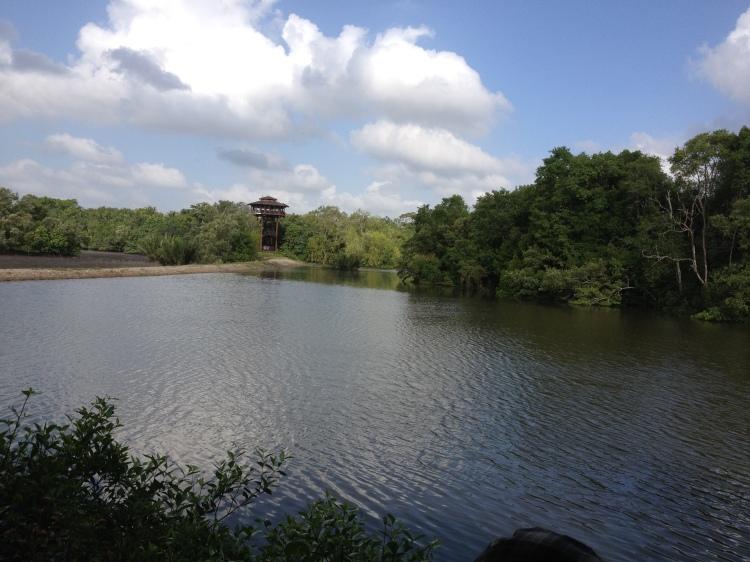 Sungei_Buloh_Wetland_Reserve,_Singapore