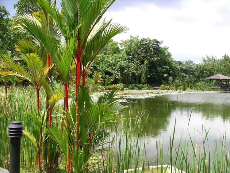 Symphony_Lake,_Singapore_Botanic_Gardens_-_20041025