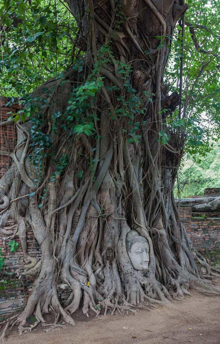 Templo_Mahathat,_Ayutthaya,_Tailandia,_2013-08-23,_DD_21