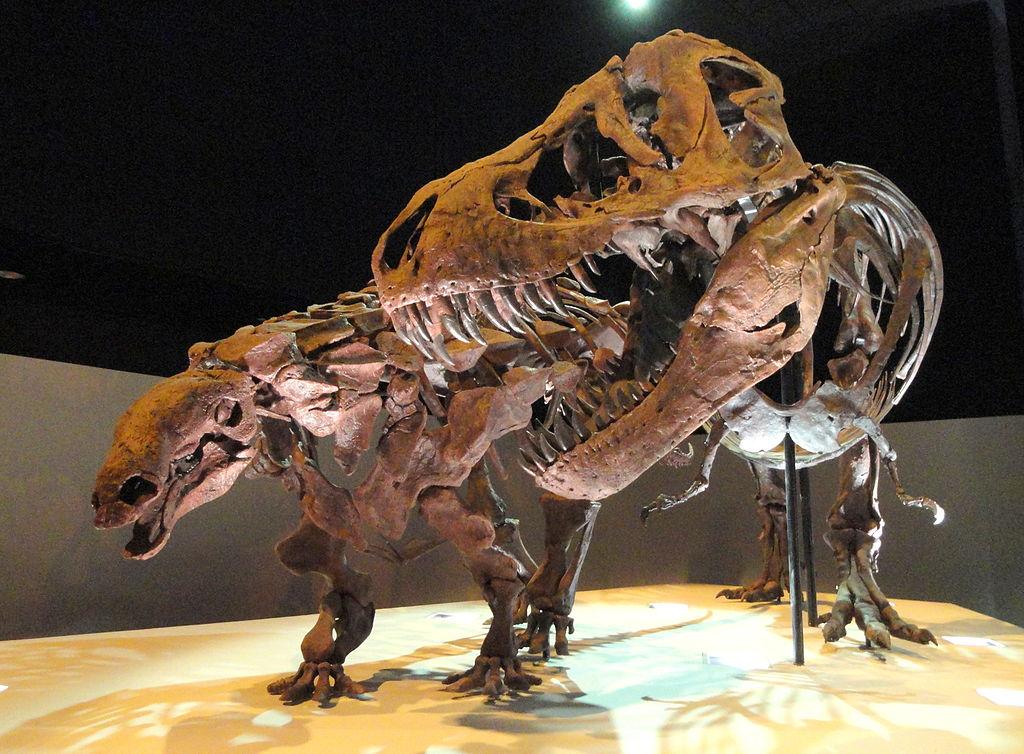 1024px-Dinosaur_exhibit_-_Houston_Museum_of_Natural_Science_-_DSC01881