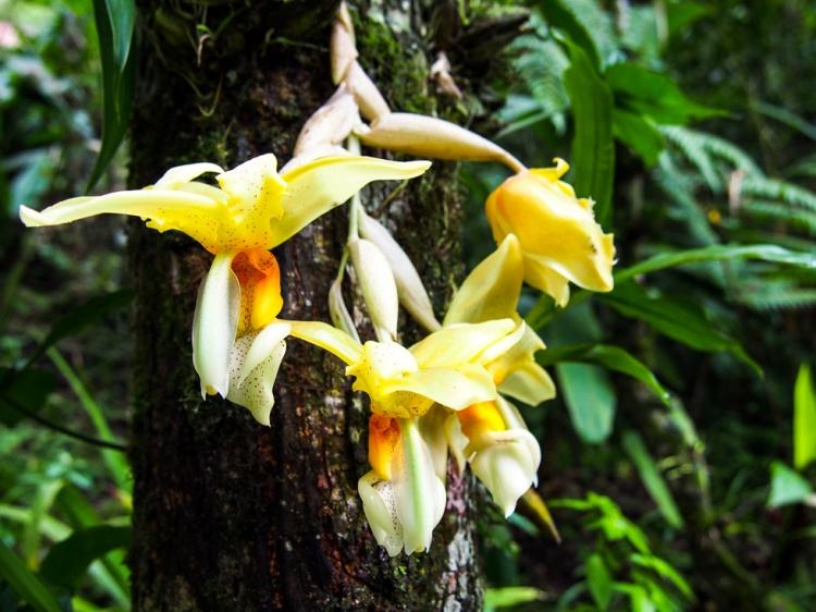 coban-guatemala-orquids