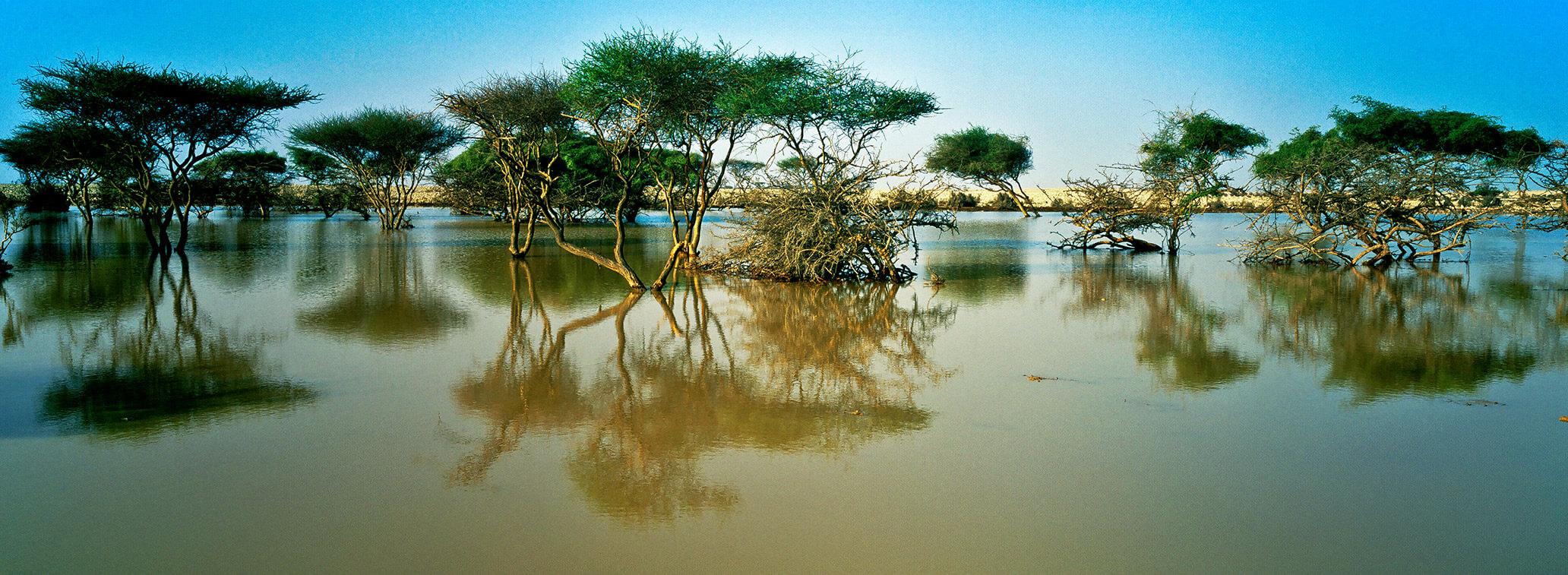mangroves-02-detail